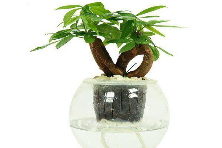 5 loại cây tốt cho phong thủy, rước về nhà tụ lộc gấp đôi-4