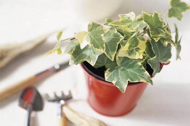 6 loại cây hút bức xạ cực tốt bạn nên đặt trong nhà