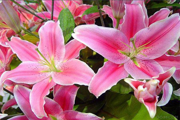 Những loại hoa tuyệt đối không nên đặt lên bàn thờ-1