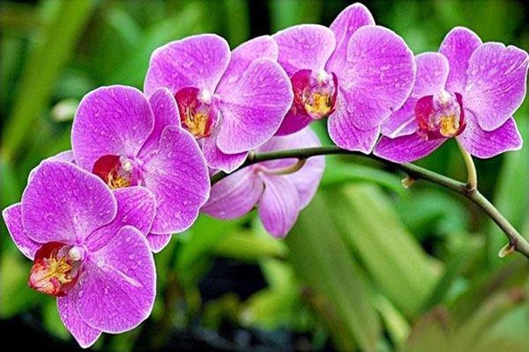 Những loại hoa tuyệt đối không nên đặt lên bàn thờ-2