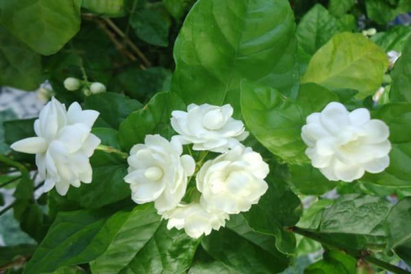 Những loại hoa tuyệt đối không nên đặt lên bàn thờ
